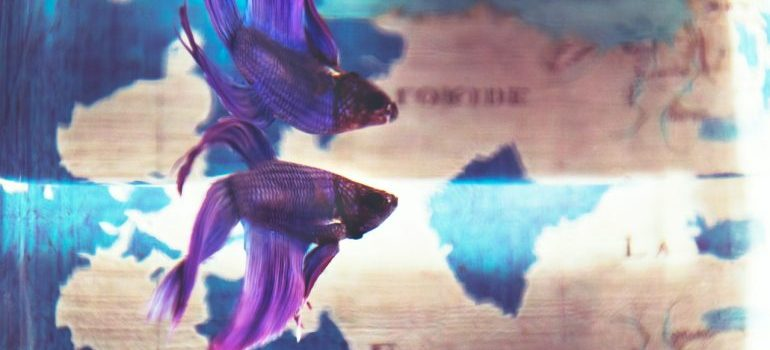 Fish in a stylized tank.